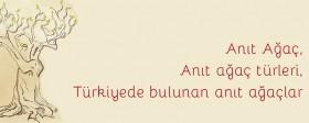 Anıt ağaç, türleri ve Türkiye'de bulunan anıt ağaçlar