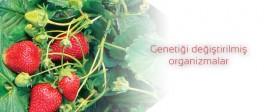 Genetiği değiştirilmiş organizmalar (GDO), GDO'nun insan sağlığına etkileri, GDO'nun zararlı çevresel etkileri