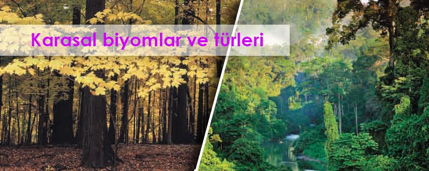 Karasal biyomlar ve türleri ( orman biyomları, çayır biyomları, çöl biyomu, tundra biyomu )