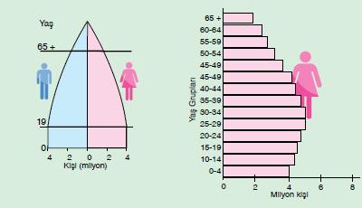 nüfus pimitleri ve özellikleri